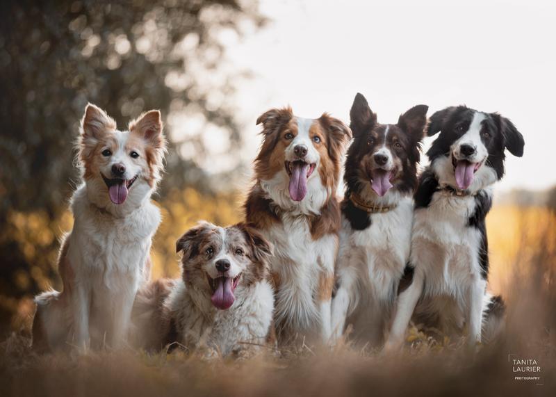 Hondenfotografie - Tanita Laurier - Fotograaf Oudenaarde