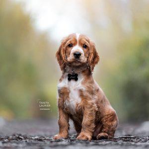 Hondenfotografie door Tanita Laurier, fotograaf uit Oudenaarde!